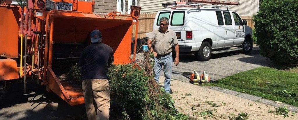 Bronx Tree Removal |Tree Removal