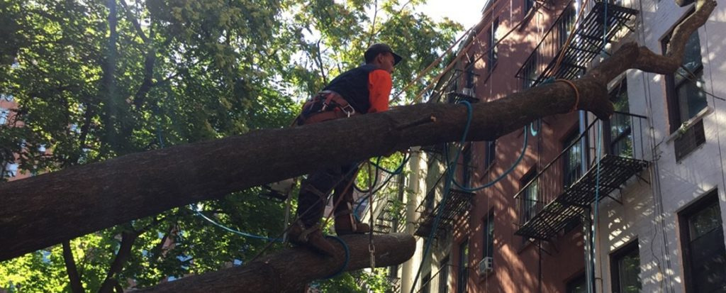 Bronx Tree Services