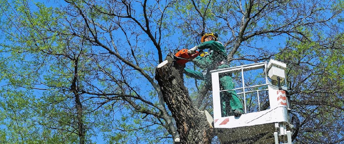 manhattan tree services