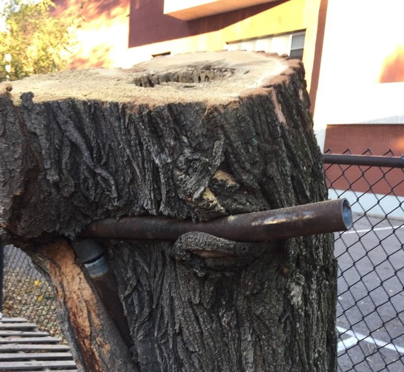 Stump Removal Service Bronx